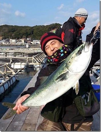 aoyamamejiro