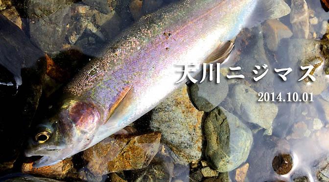 天川ニジマス2014